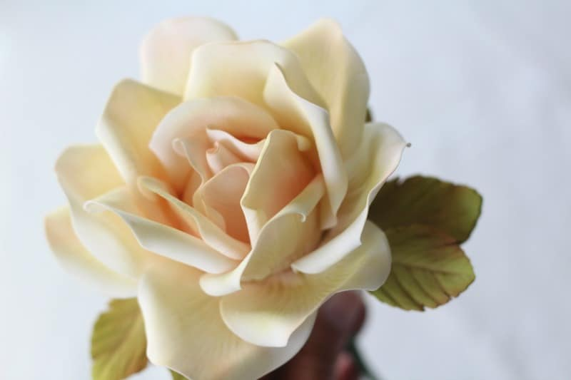 Large Gumpaste Rose side view
