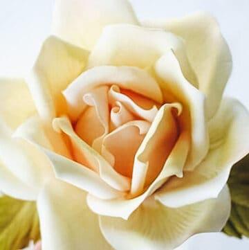 coloring a gumpaste rose featured image