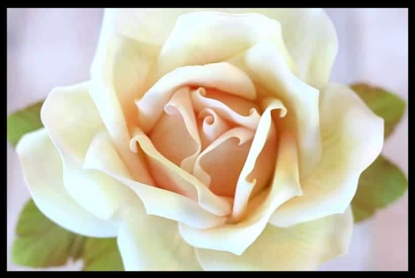 How To Add Color To A Large Gumpaste Rose I Scream For Buttercream