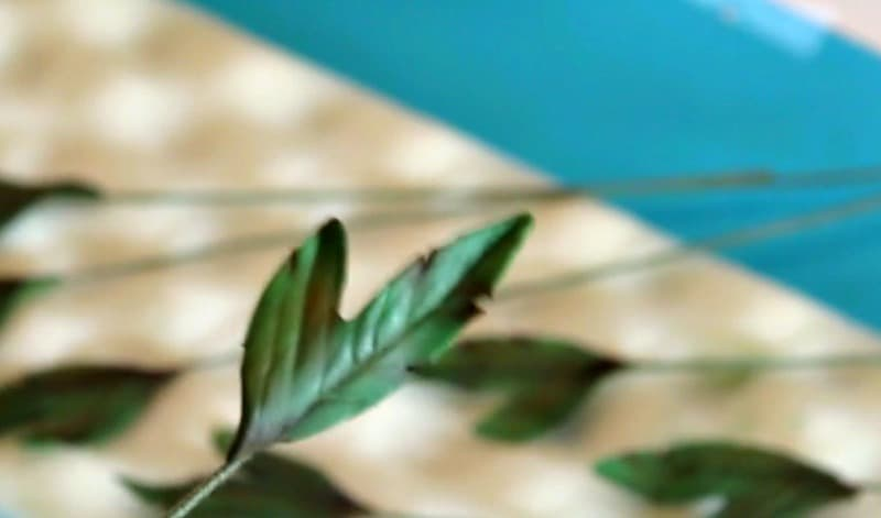 Steaming gumpaste peony leaves